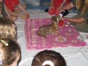 tiger2-medium.jpg