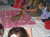 tiger3-medium.jpg